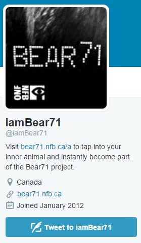Bear 71 Twitter