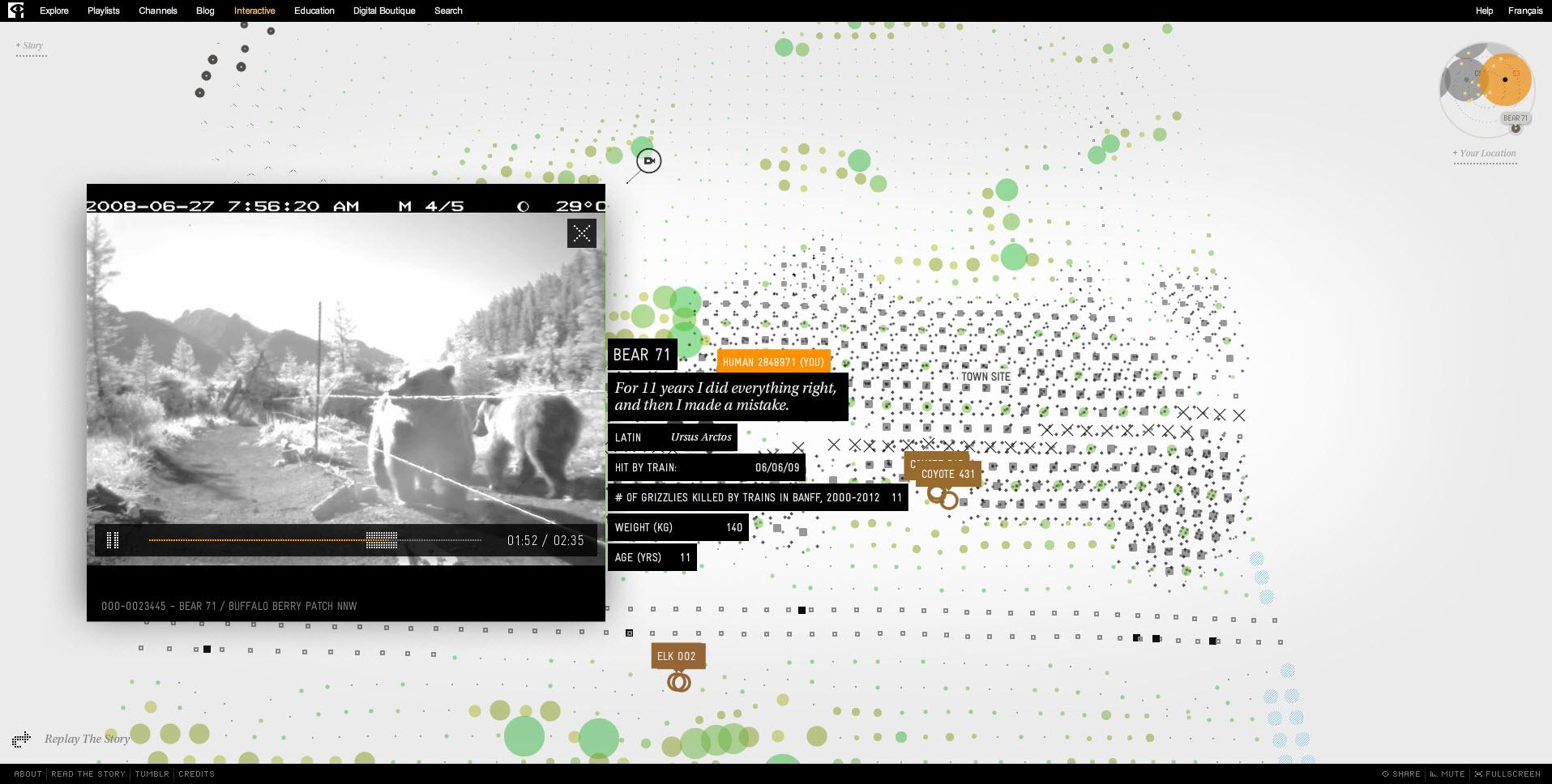Interactive Documentary Bear 71