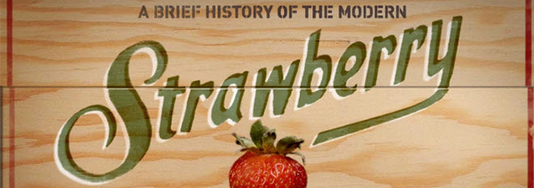Modern Strawberry Header